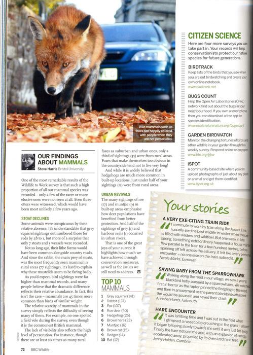 bbcwildlife-fox