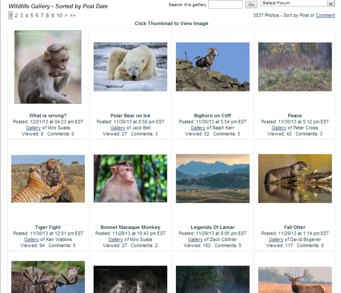 naturephotographers-wildlifegallery