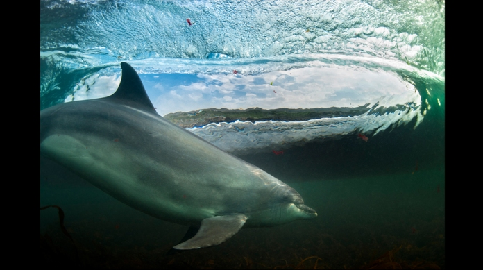 _69570782_dolphinps