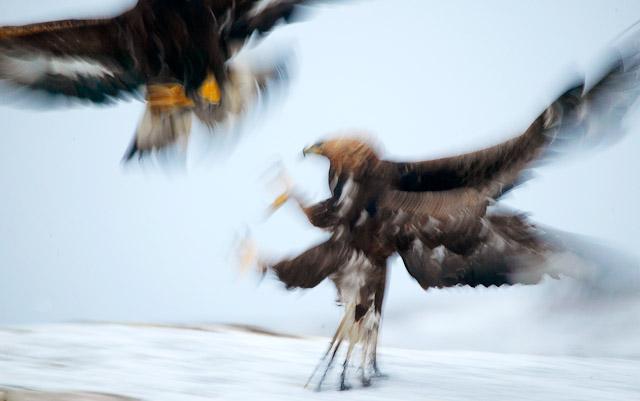 pal-hermansen-birds-2